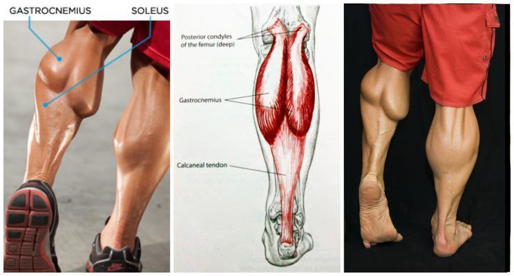 Phương pháp chạy bộ không làm to bắp chân