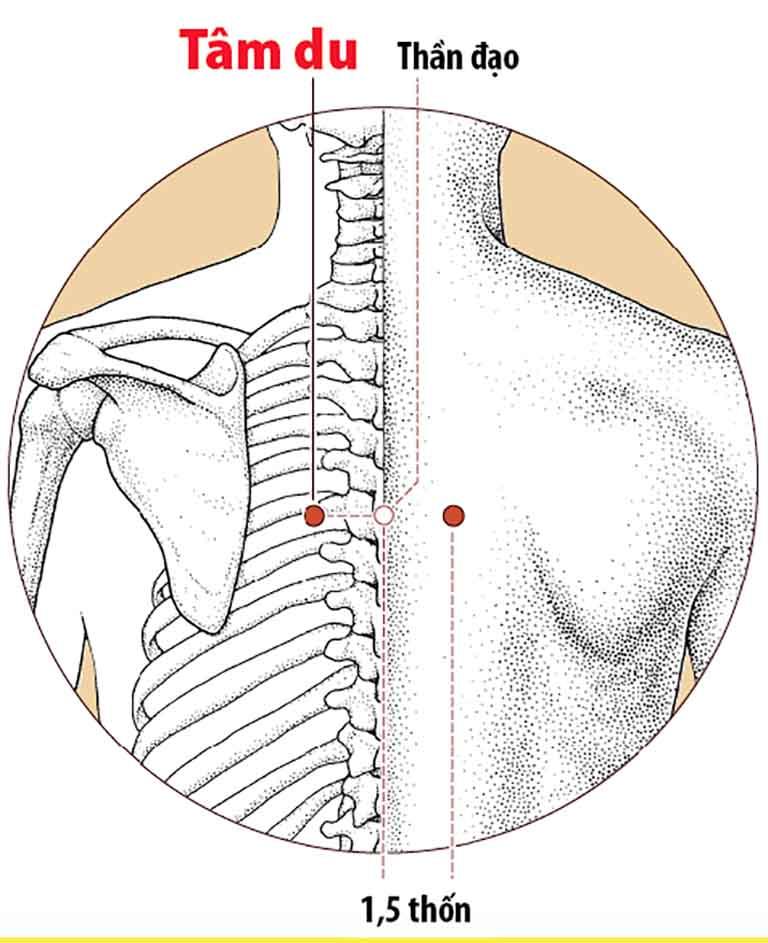 Ý nghĩa hệ thống kinh - huyệt đạo trên cơ thể người.